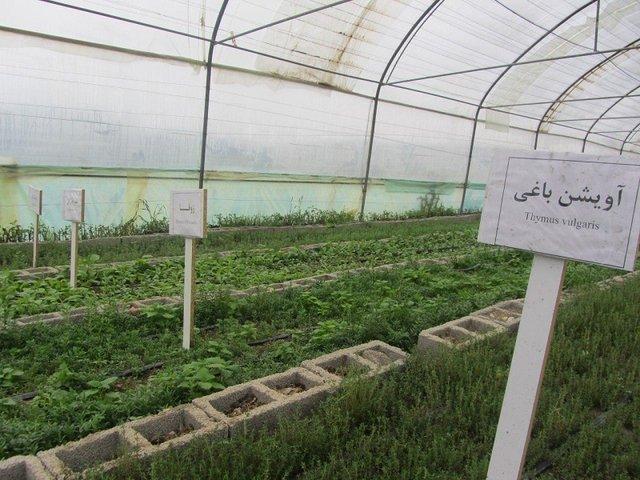 آغاز ساخت بزرگترین شهرک گلخانهای خاورمیانه در  تاکستانِ قزوین