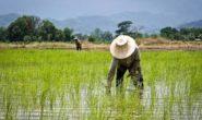 کمتر از یک درصد بهرهبرداران کشاورزی تحصیلات دانشگاهی دارند