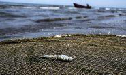 دریای خزر مواج و متلاطم میشود
